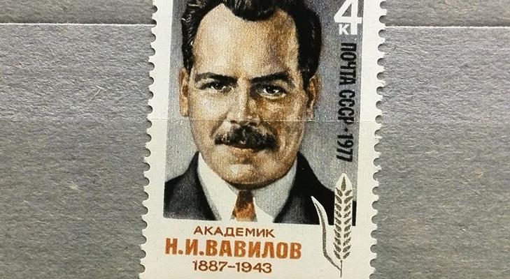 """Марка """"90-летие со дня рождения Вавилова"""" 1977 год"""