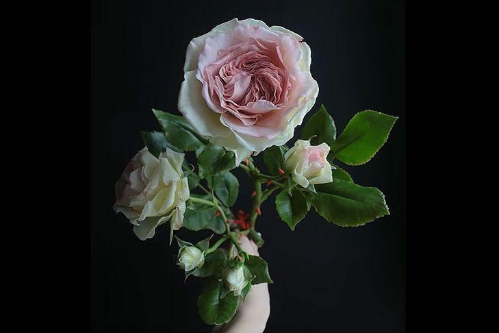 Мастер-класс «Роза из холодного фарфора»