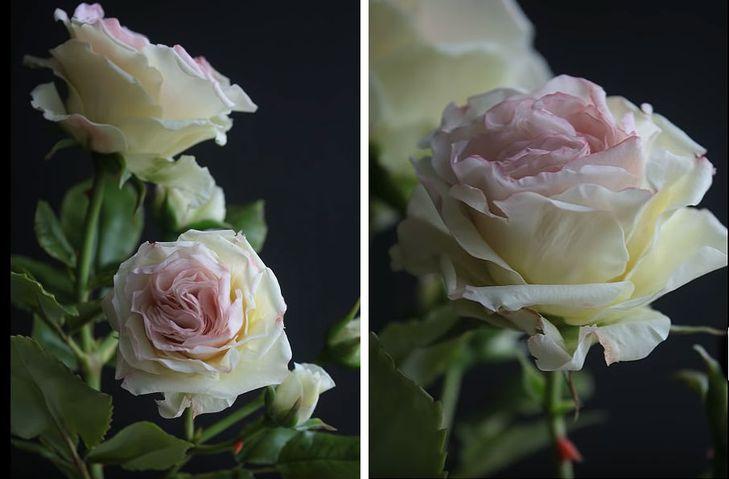 Поэтапное изготовление розы из холодного фарфора